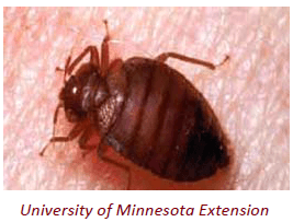Bedbug Image Courtesy of University of Minnesota Extension