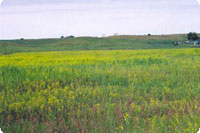 Area bordering both Highland Grove and Eglon townships before the introduction of flea beetles